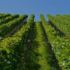 Randonnée vignoble